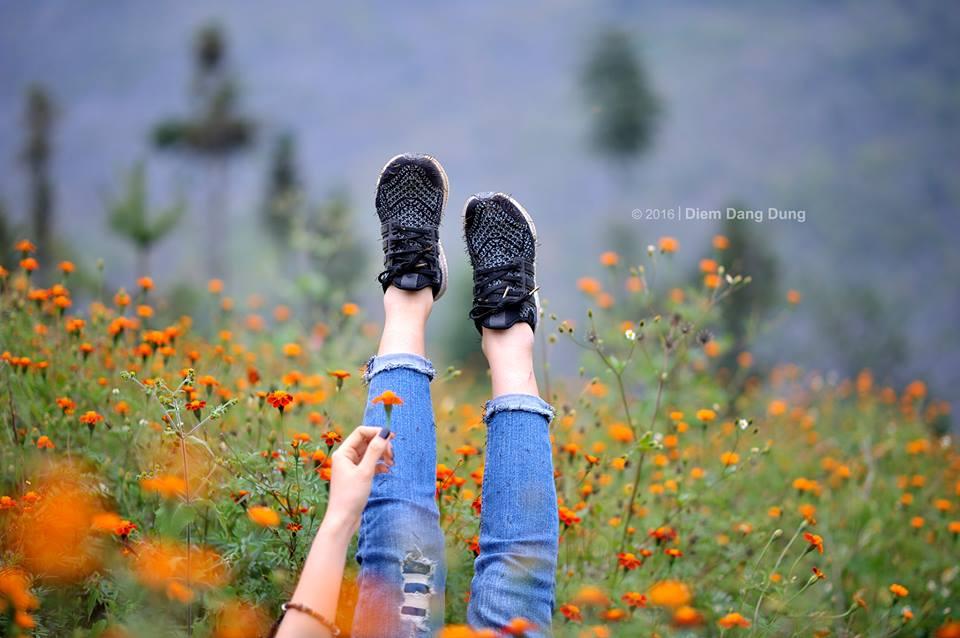 """Thu Hà Giang còn có một mùa hoa """"gây thương nhớ"""" hơn cả tam giác mạch mang tên: Cúc Cam"""