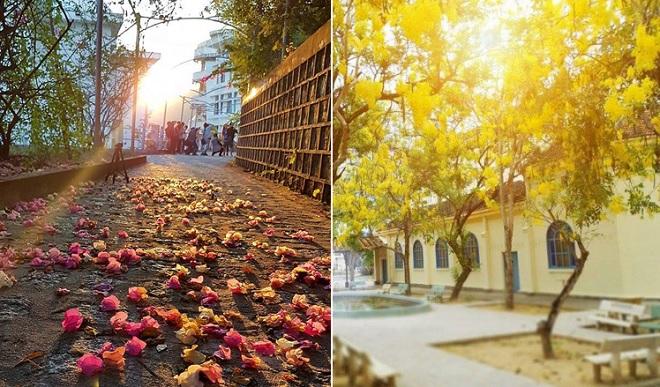 Đại học Nha Trang - Ngôi trường quanh năm hoa đua nở, sinh viên tha hồ ngắm hoàng hôn trên biển