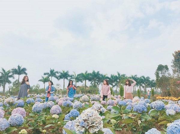 """""""Đắm chìm"""" giữa mê cung hoa đẹp phát hờn ngay ngoại ô Hà Nội, đi chưa đến 10 km mà cứ ngỡ đã vào Đà Lạt"""