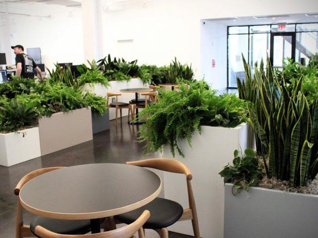 Và còn vố số góc khác trong văn phòng cũng có cây xanh nằm rải rác.