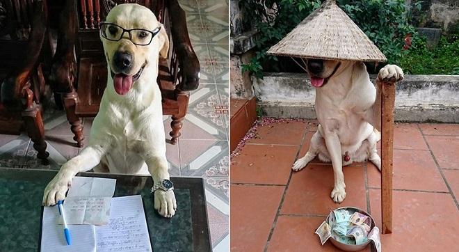 Lạ kỳ chú chó tên Trịnh Văn Củ Cải do chủ nhân tự huấn luyện có khả năng làm toán