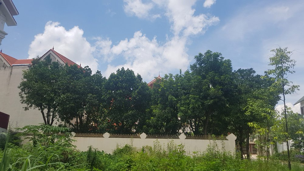"""Chủ nhân của biệt thự này trồng một """"rừng"""" cây ăn quả. Sở hữu của những lô biệt thự này theo người dân địa phương thì đa phần là các doanh nhân thành đạt xứ Lạng."""