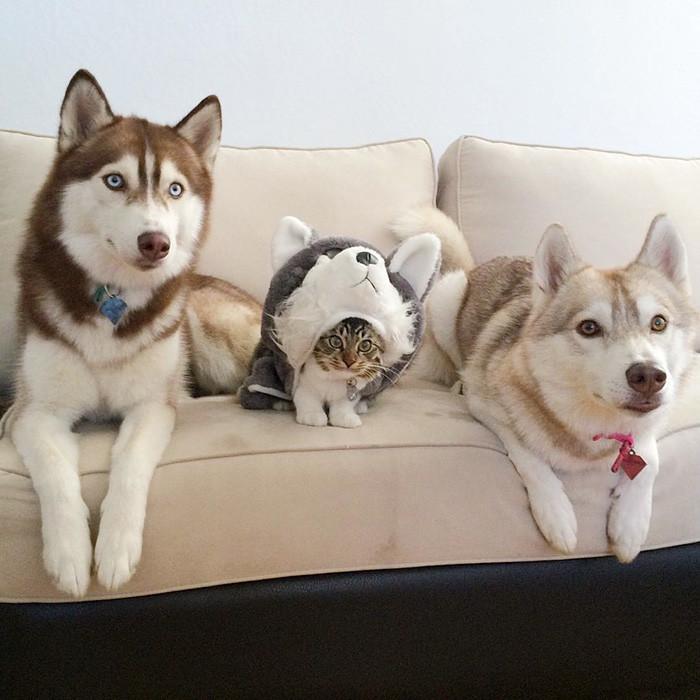 Dần dần Roise trở nên quen thuộc với gia đình bầy chó.