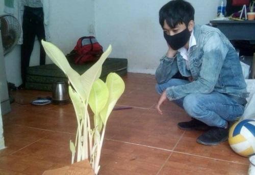 """Ở quê ra sau Tết, sinh viên Cao đẳng Phương Đông Đà Nẵng thấy """"cây chuối thần"""" mọc giữa phòng trọ"""