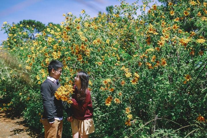 Ba Vì mùa này đẹp lắm ai ơi, hoa dã quỳ vàng nhuộm khắp chốn, đi ngay thôi nào!