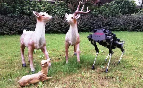 Chó robot công nghệ cao từ vài chục đến vài trăm triệu đồng được kỳ vọng thay chó nhà trong tương lai