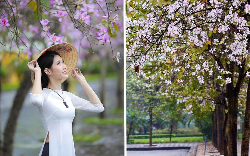 Rủ nhau đi hết các nẻo đường Hà Nội thôi em ơi, hoa ban đã ửng tím cả vùng trời đó rồi!