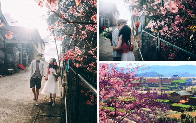 """""""Tan chảy cả trái tim"""" trên con đường hoa anh đào ngọt ngào nhất Việt Nam"""