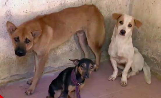 Tiêu hủy chó thả rông sau 48 giờ không có người nhận là đúng đắn hay nhẫn tâm?