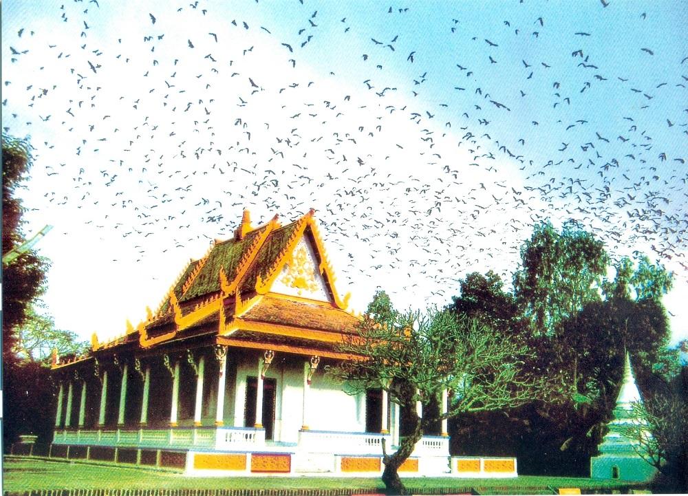 Du lịch Sóc Trăng nhất định phải ghé ngôi chùa kỳ lạ nhất Việt Nam - Chùa Dơi