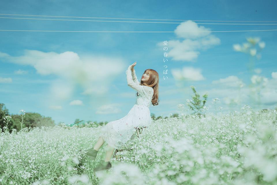 Lời như đồn: Hoa cải bản Lùn đang nở trắng trời Mộc Châu đẹp tựa như trong cổ tích