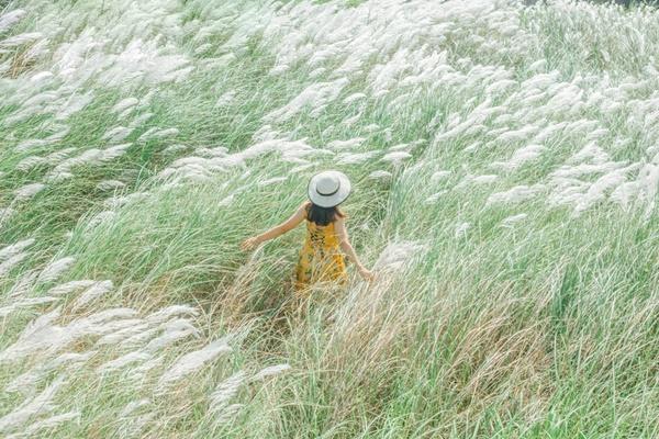 """""""Xiêu lòng"""" trước cánh đồng lau nở trắng muốt vừa cập bến Đà Nẵng"""