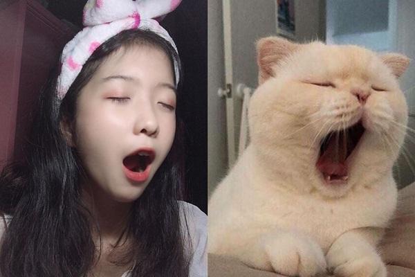 """Chỉ vài biểu cảm ghép với thú cưng, 10x Nha Trang đã """"gây bão"""" cộng đồng mạng nhờ lý do này!"""