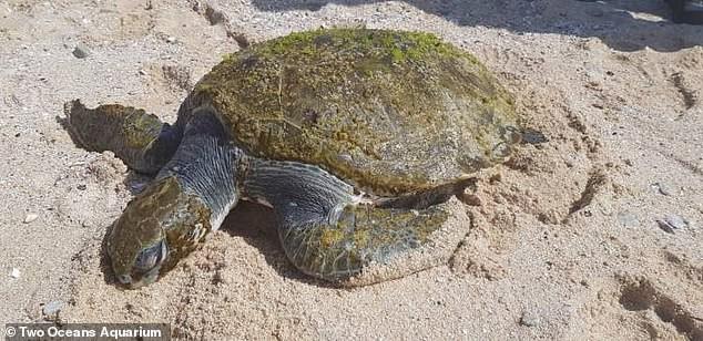 """Câu chuyện buồn về chú rùa tội nghiệp này chứng minh câu nói """"Rác nhựa khiến cả đại dương mắc nghẹn"""""""
