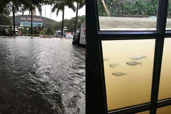 """Đà Nẵng """"thất thủ"""" vì mưa ngập chỉ sau 1 đêm, giao thông ách tắc, cá bơi tận vào trong nhà"""