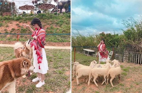 """""""Đập hộp"""" cafe nông trại cừu siêu hot tại Đà Lạt đang """"đốn tim"""" giới trẻ"""