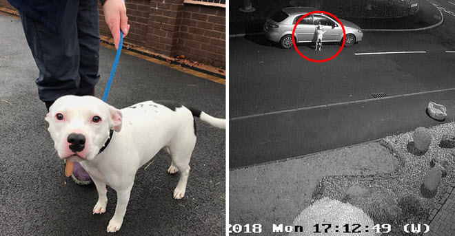 Clip chú chó đuổi theo ô tô của chủ sau khi bị bỏ rơi khiến dân mạng rơi nước mắt