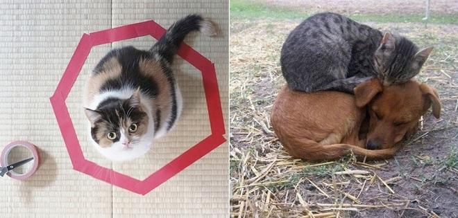 """Những bức ảnh chứng minh """"boss"""" mèo là giống loài đáng yêu """"vô đối"""""""