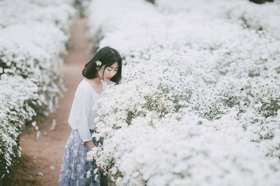 Trót lỡ hẹn với mùa cúc họa mi Hà Nội, thì lên lịch ngay với tọa độ ngắm hoa khác đang độ nở rộ đẹp không kém nhé