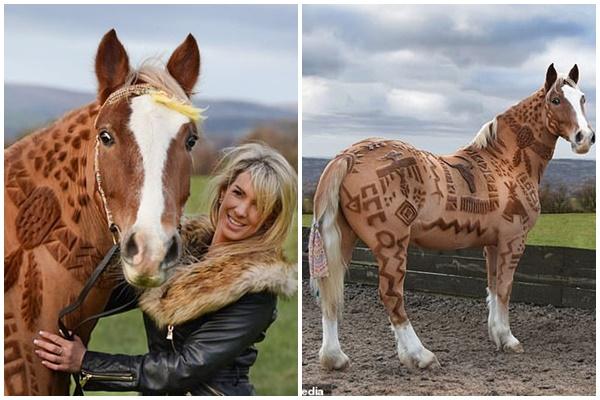 Cô gái có biệt tài tạo ra nhiều tác phẩm nghệ thuật trên bộ lông của những chú ngựa