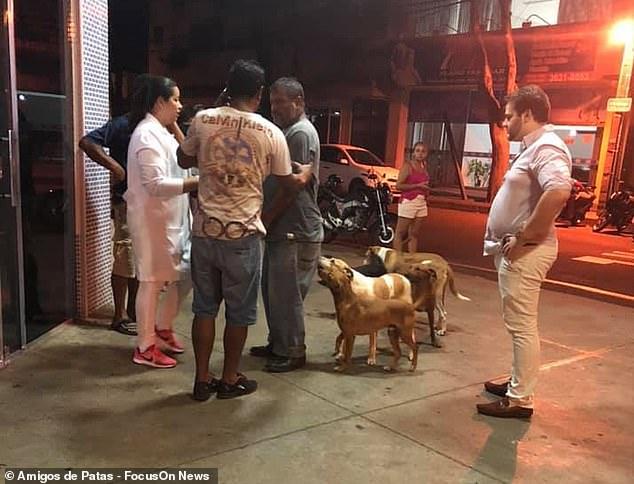 Cảm động câu chuyện 6 chú chó chạy theo xe cứu thương, suốt 24h đợi chủ ở cửa bệnh viện