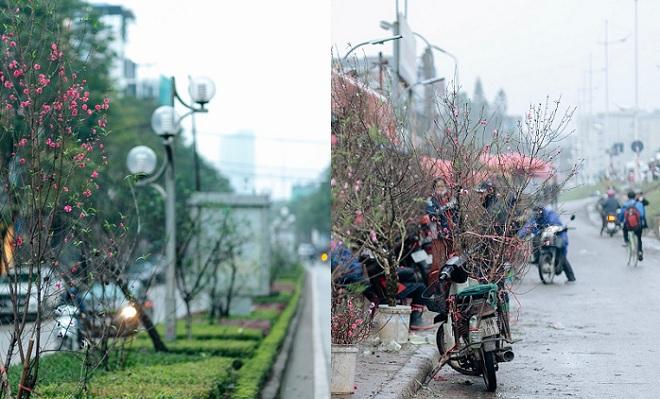 Hoa đào nở rực những góc phố Hà Nội ngày mưa phùn se lạnh, cảm thấy Tết đã thật gần!