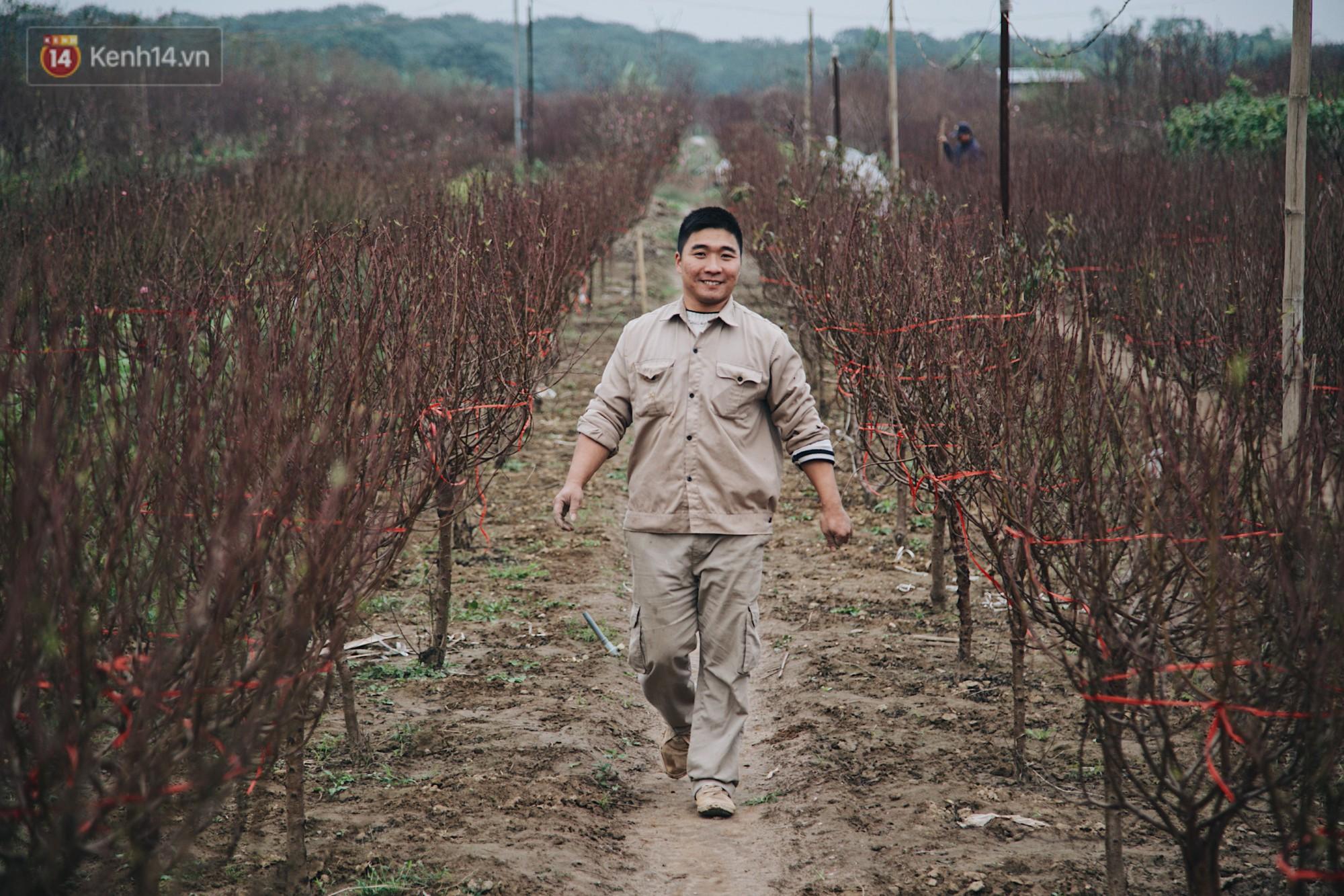 Trong khi đó, làng đào nổi tiếng nhất Hà Nội - Nhật Tân cũng đang tất bật chuẩn bị cho những cây đào tới tay người dân. Những ngày giáp Tết Âm lịch, vườn đào Nhật Tân dường như rộn ràng hơn rất nhiều.