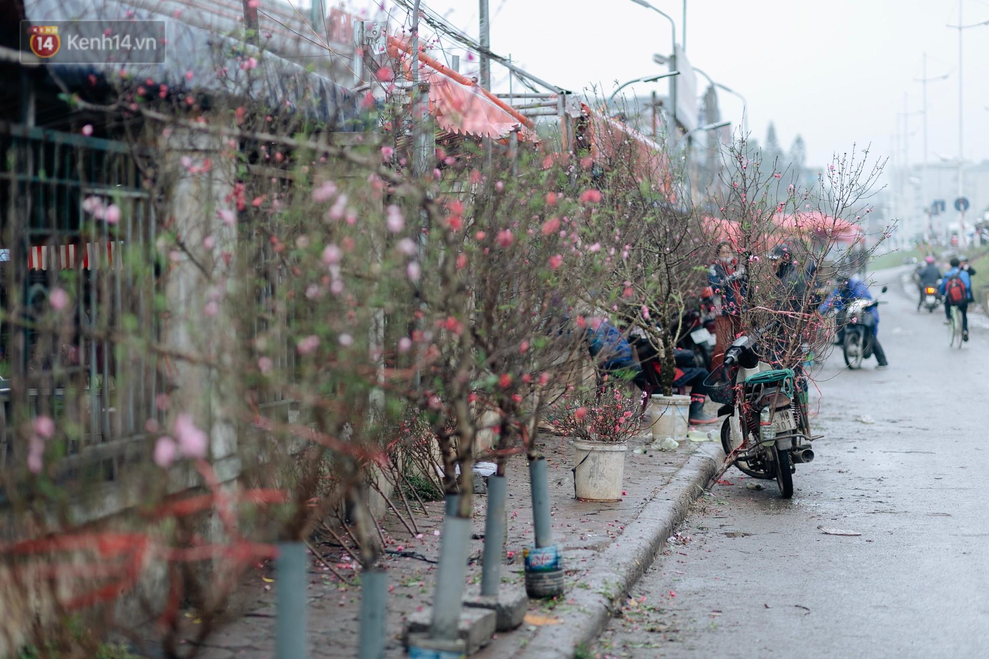 """Mặc cho mưa phùn ẩm, những cây đào chợ hoa Quảng An vẫn """"khoe sắc""""."""