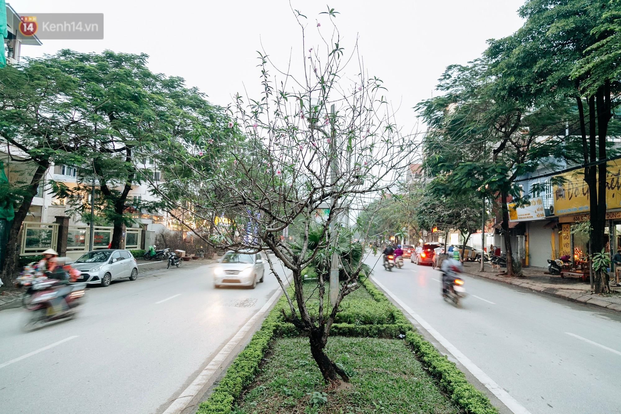 Tết Kỷ Hợi 2019 đã gần cận kề, chỉ còn cách 1 tháng nữa. Trong những cơn mưa phùn đặc trưng của thủ đô, hoa đào nở càng khiến lòng ta thêm rạo rực.