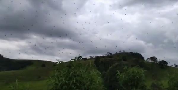 """Người dân sợ hãi trước hiện tượng """"mưa nhện"""" ở Brazil, chuyên gia giải thích đơn giản"""