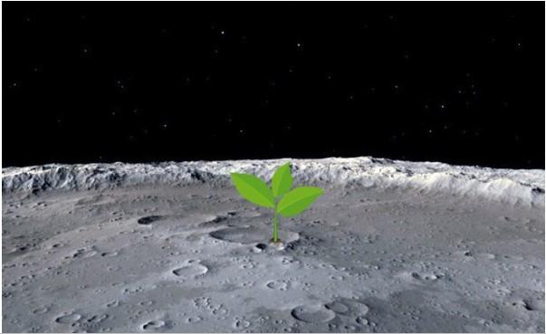 Lần đầu tiên ươm mầm thành công cây xanh trên mặt trăng, thắp lên sự sống ngoài Trái Đất
