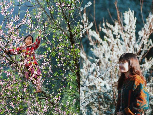 Gọi tên những mùa hoa đẹp nao lòng trên miền cao nguyên Mộc Châu dịp cận Tết Nguyên Đán này