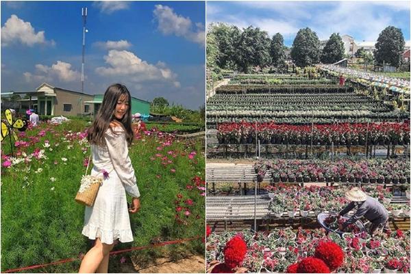 """""""Zoom"""" cận cảnh làng hoa lớn nhất Nam Bộ - địa điểm chụp hình Tết chuẩn không cần chỉnh"""