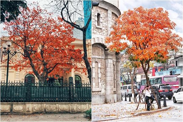 """Hà Nội gây nhớ thương với mùa """"cây thay lá vàng"""" nên thơ như trời Âu"""