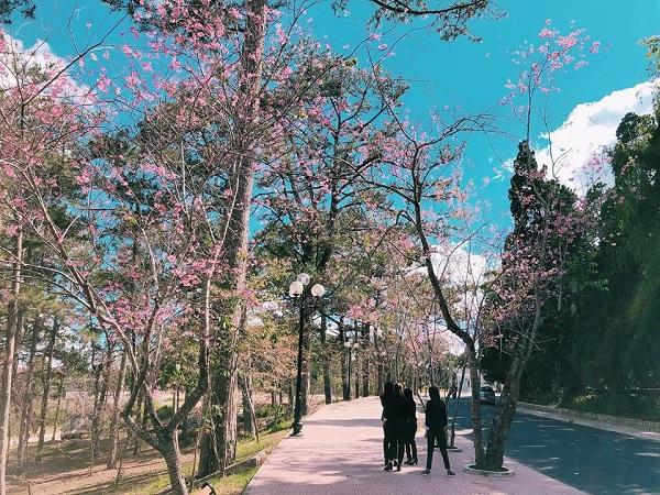 Xao động tâm hồn với mùa cây lá nhuộm hồng khiến ngôi trường Việt Nam ngỡ như ở Nhật, Hàn