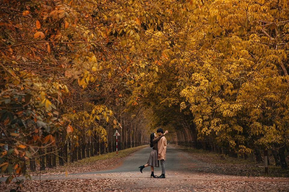 """Đến Hàn Quốc cũng phải """"hờn kém xanh"""" bởi một Việt Nam quá đẹp mùa lá vàng rơi xứ Bình Dương!"""