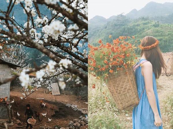 """Mục sở thị """"chuẩn chỉ"""" nhất những mùa hoa đang nở tại Hà Giang để bạn đi nhanh kẻo lỡ"""