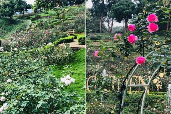 """""""Loạn tim"""" trước vườn hồng lớn nhất Việt Nam giữa lòng thủ đô đang khiến giới trẻ phát cuồng"""