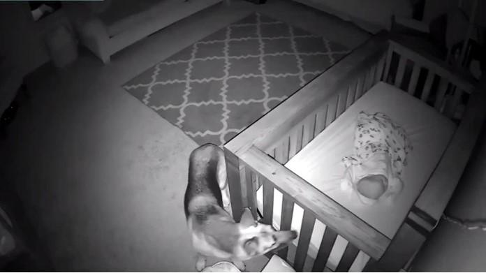 Bí ẩn chú chó vào phòng em bé lúc 2h sáng , ông bà chủ định đuổi đi và cái kết cảm động