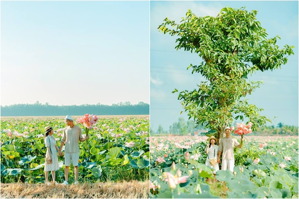 Check-in liền tay có ngay ảnh đẹp ở cánh đồng sen mới nổi ở An Giang