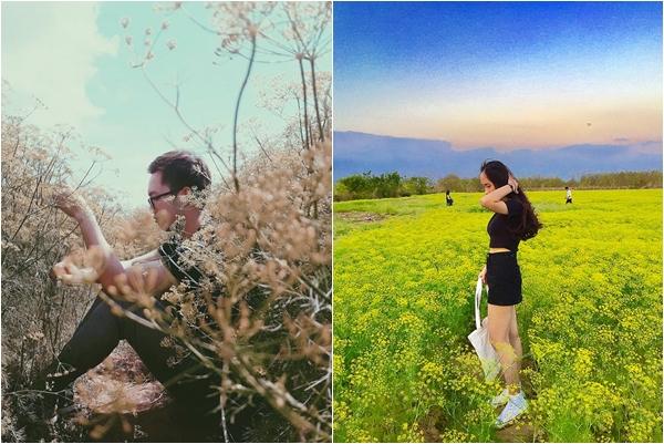 """Ngỡ ngàng triệu góc sống ảo """"cánh đồng hoa thì là"""" đang hot nhất Ninh Thuận"""