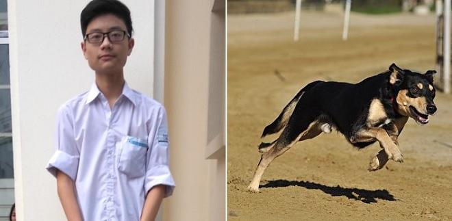 Sau 2 lần bị chó đuổi và 1 lần bị chó vồ được, nam sinh chế tạo thiết bị đuổi chó thành công