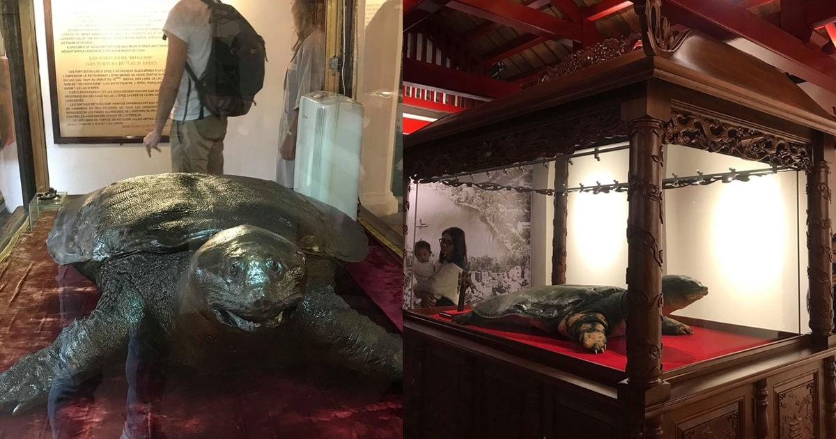 """Tiết lộ """"bí mật ly kỳ"""" về tủ kính bảo vệ cụ rùa hồ Gươm trăm tuổi tại đền Ngọc Sơn"""