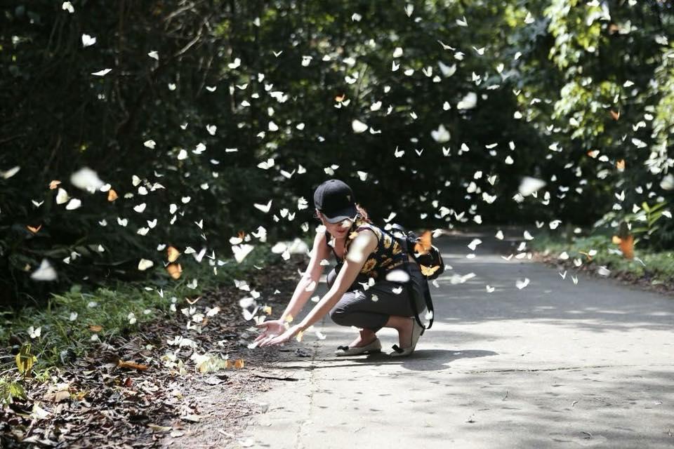 Tháng tư cận kề rồi, về rừng Cúc Phương ngắm mùa bướm bay khắp trời thôi nào