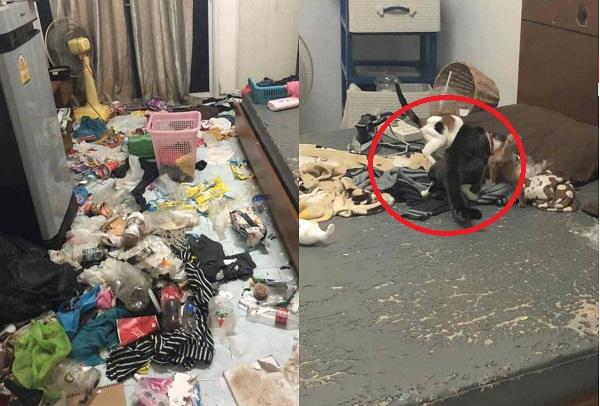 Gái xinh bùng tiền nhà trọ để lại căn phòng như bãi rác nhưng hình ảnh 3 chú mèo bị bỏ đói cả tháng mới thực sự ám ảnh
