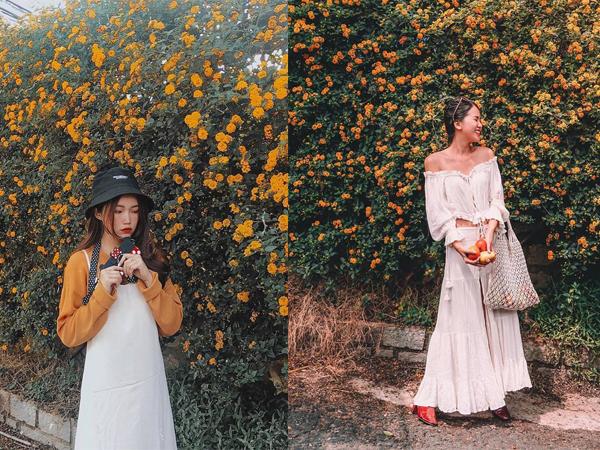 """Chán chụp vườn hoa trăm bức như một thì """"đổi gió"""" với Tường hoa vàng """"so deep"""" giữa lòng Đà Lạt"""