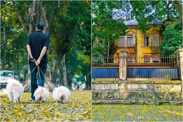 Hà Nội không chỉ có mùa thu thay lá, mà còn có mùa lá sấu rụng tháng 4 đẹp như một thước phim