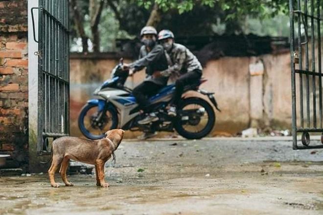 Nhóm bạn trẻ làm bộ ảnh tái hiện cảnh trộm chó để lên án vấn nạn nhức nhối này