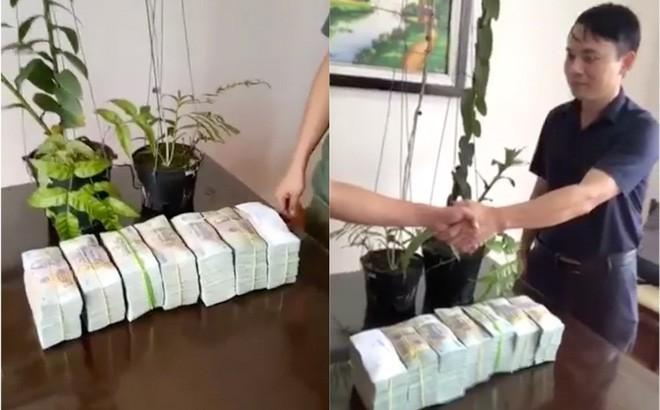 Khó tin cây lan giá 3 tỷ rưỡi trông bình thường thế này, mục đích mua còn bất ngờ hơn