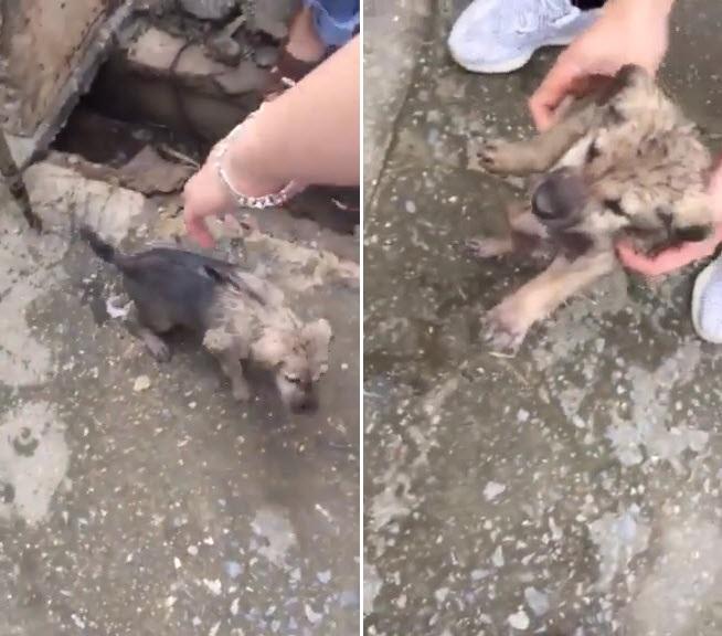 Ảnh 3: Cứu cún con dưới cống trường học - We25.vn
